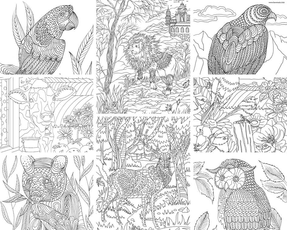 Animals and Birds - 10 Coloring Pages