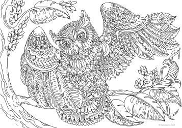 Owl with a Twist